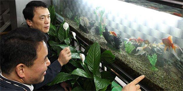 Goldfische sichern G-20-Gipfel in Seoul