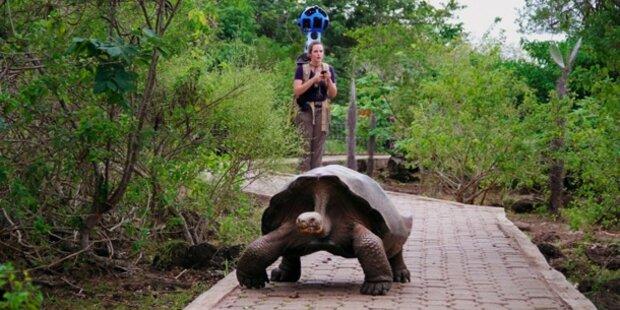 Mit Google auf die Galapagos Inseln