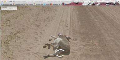 Google-Auto soll einen Esel getötet haben