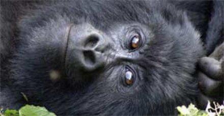 16.306 Arten vom Aussterben bedroht