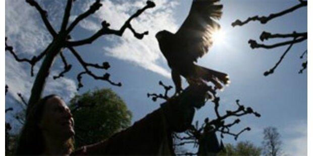 Tiroler von ausgehungertem Greifvogel angegriffen