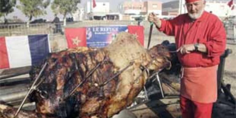 Koch grillte in Marokko 550-Kilo-Dromedar