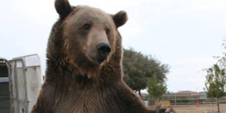 Grizzly tötet seinen Trainer in Los Angeles