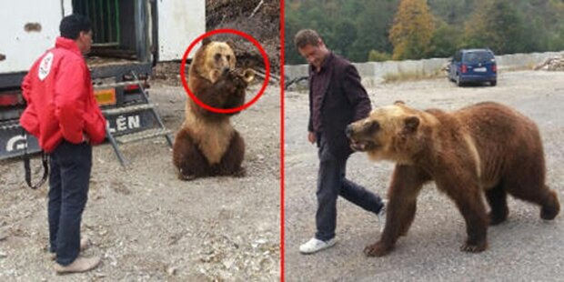 Bei Polizei-Kontrolle kam Grizzly entgegen