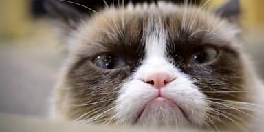 "Youtube-Hit ""Grumpy Cat"" wird Kinostar!"
