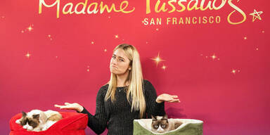 """""""Grumpy Cat"""" jetzt bei Madame Tussauds"""