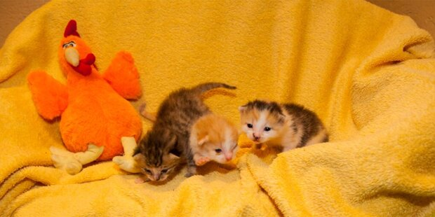 Todes-Drama um süße Katzenbabys