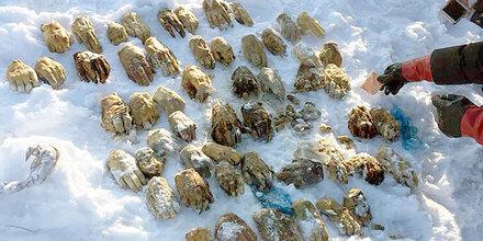 54 abgehackte Hände in Russland gefunden