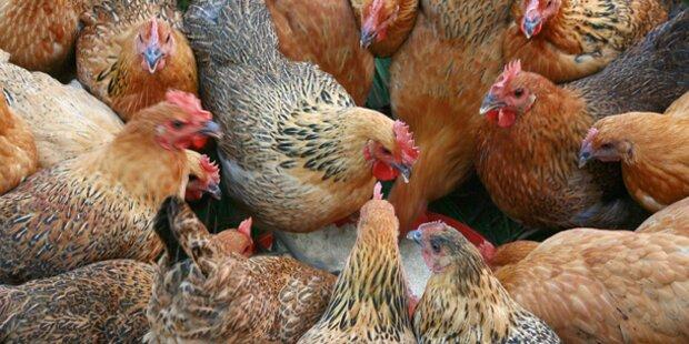 Grausamer Tierquäler zündet Hühner an