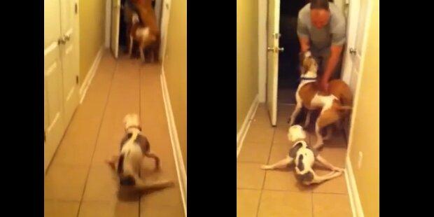 Gelähmter Hund begrüßt Herrchen