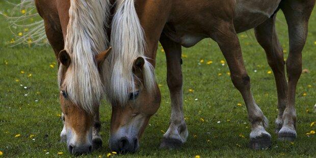 Zwei Pferde prallen gegen Hausmauer - sofort tot