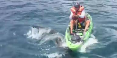 Kajak-Fahrer entkommt Hai-Attacke knapp
