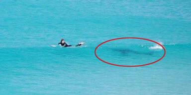 Hier entkommt ein Surfer einem Riesen-Hai