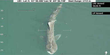 Das ist der Riesen-Hai vor der US-Ostküste