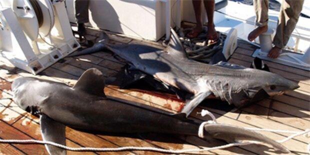 Badeverbot nach Hai-Attacken aufgehoben