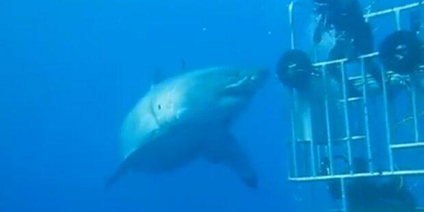 Das ist der größte Hai aller Zeiten