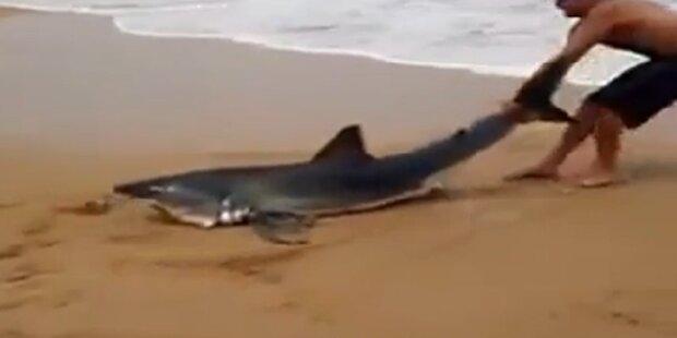 Mann zerrt Hai an Flosse ins Meer