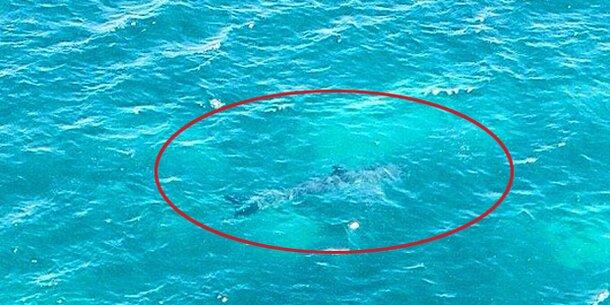 Wie Groß Ist Der Größte Hai