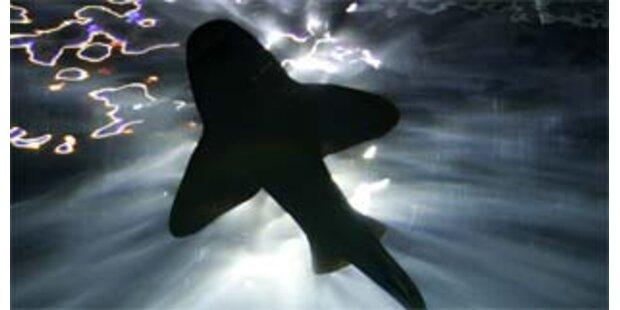 Surfer vor Mexiko von Hai getötet