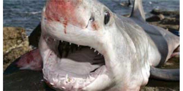 Hai beißt Surfer in Australien zu Tode