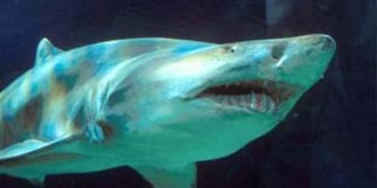 Rettung vor Haien wird teuer für Taucher