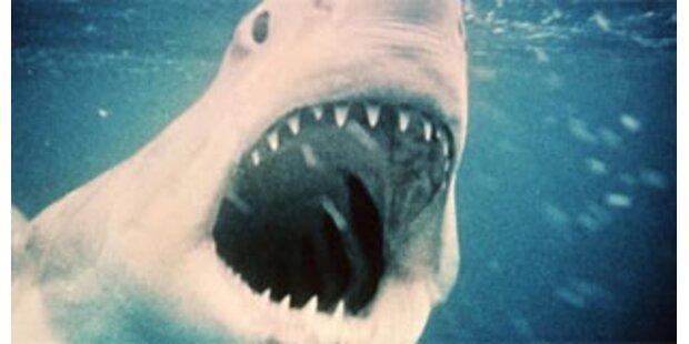 Hai entführte Surfer übers Meer