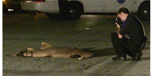 Hai lag mitten in Miami auf der Straße