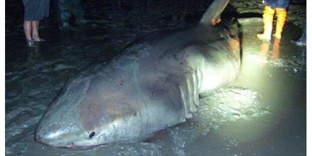 Tödliche Hai-Attacke in Südafrika