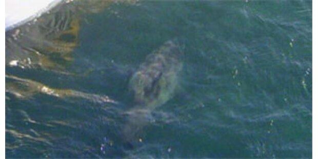 Killer-Angriffe von Haien Down Under häufen sich