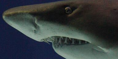 Hai mit Faust in die Flucht geschlagen
