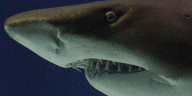 Hai rammt Surfer Zähne ins Bein