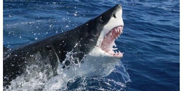 US-Surfer stirbt nach Hai-Attacke