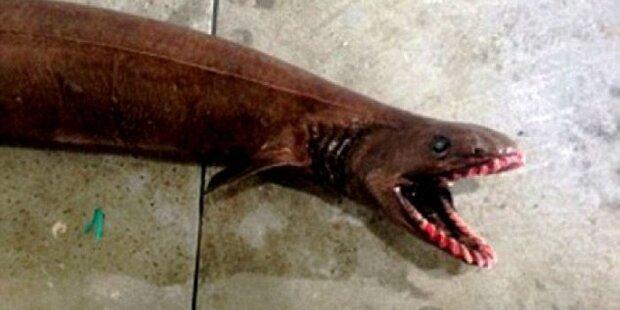 Fischer fangen Hai mit 300 Zähnen