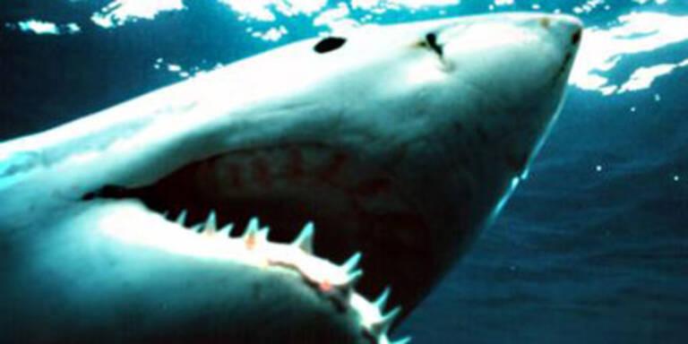 Hai reißt Urlauber ein Bein ab