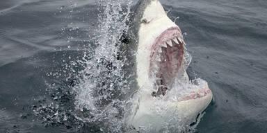 Haifisch Zähne