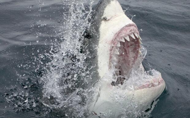 Unsere Zähne sind wie Haifischzähne