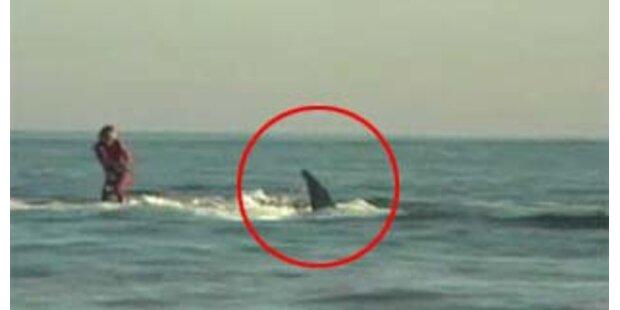 Video zeigt Mann beim Surfen mit einem Hai