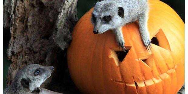 Halloween Event- und Filmtipps!