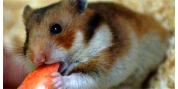 Hamster rettete Mattersburger Familie vor Brand