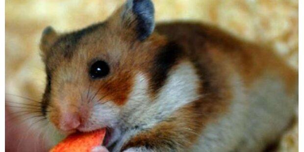 Brite tötet Hamster in der Mikrowelle