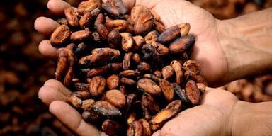 Hände mit Kakaobohnen