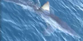 Video: Hai-Alarm an kroatischer Urlauber-Küste