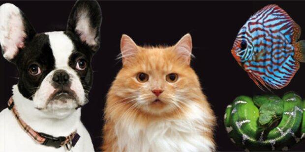 Die Messe für alle Tierliebhaber