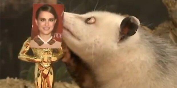Opossum Heidi schielt auf Natalie Portman