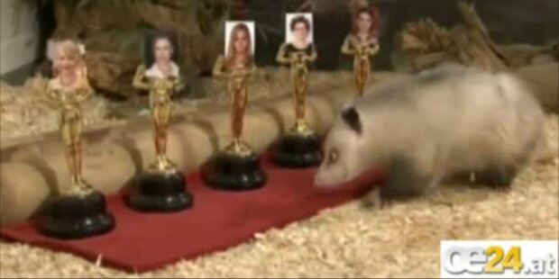 Portman gewinnt Oscar - sagt Opossum Heidi