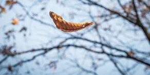 Traum-Herbst geht in die Verlängerung