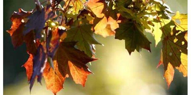 Am 23. September beginnt der Herbst