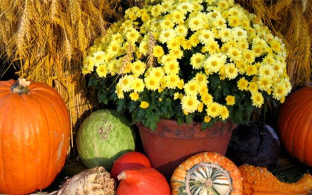 Die schönsten Herbst-<br/> Dekorationen