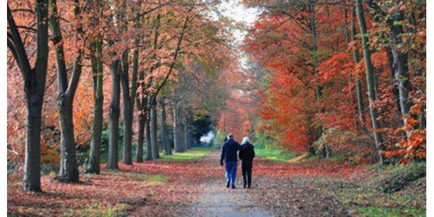 Spaziergänge halten Gedächtnis frisch