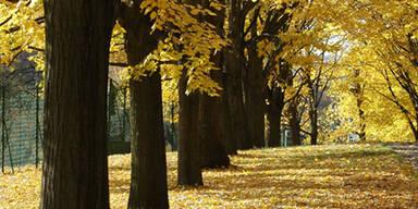 Traumhaftes Herbstwetter
